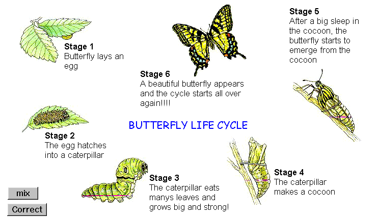 Microworlds project - butterlfy life cycle with tech boxes displayed