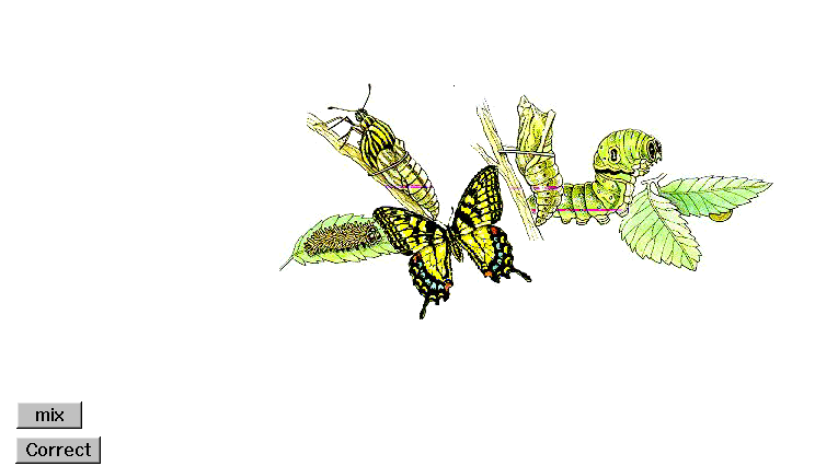 animated butterfly clipart. piece Butterfly clip art
